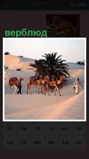 в пустыне идет верблюды вместе с погонщиками и поклажей на спине