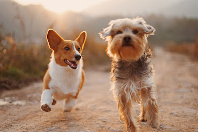 Two dogs are running down a dirt road together