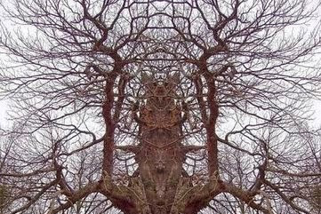 Cerita Seram Pohon Pemangsa Manusia