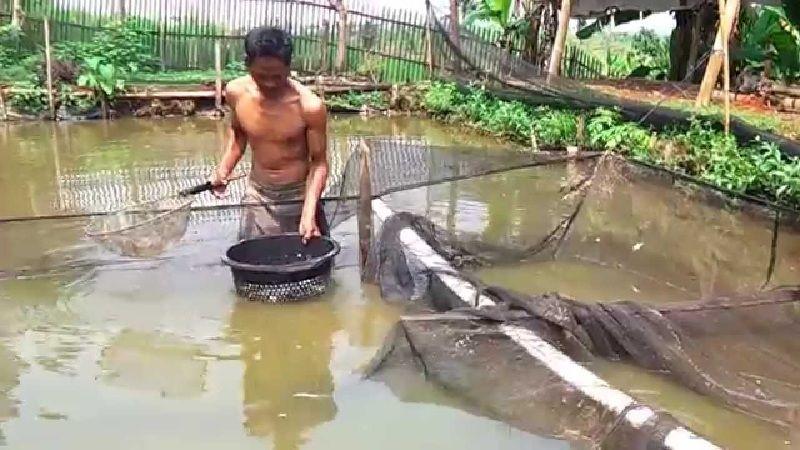 Pakan ikan patin