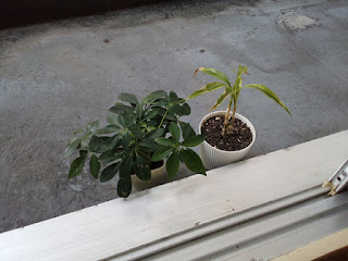 観葉植物の写真2018.03.20