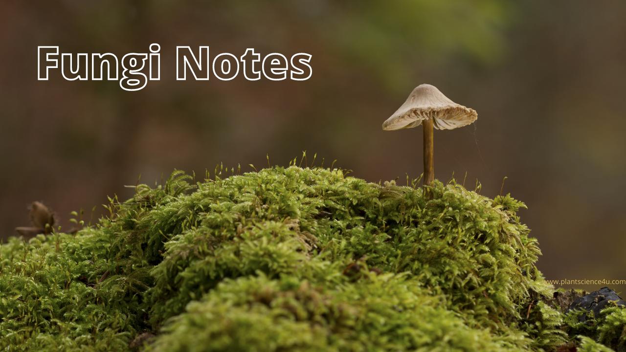 Notes on Fungi - Mycology Notes