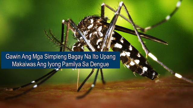 "Dengue carrying mosquitoes are everywhere and every home must be protected from it. The first line of defense against the dreaded disease is prevention and we can all do it by doing these simple steps at home.      Ads      The Department of Health (DOH) recently declared a ""national dengue epidemic"" since dengue cases have been significantly increasing. This is 98% higher than the numbers in 2018, six hundred and twenty two people already lost their lives this year alone.  While the local government units are addressing the situation of the epidemic, the first step to prevent it starts from our homes.  Here are some home hacks that you can do to prevent mosquitoes from breeding to get rid of dengue.   The DOH recommends The Enhanced 4-S implantation which calls for everyone to be active in controlling the spread of mosquito population and avoiding any possible dengue deaths within the community.     1. Search  Find out where mosquitoes thrive and destroy their breeding sites. Mosquitoes lay their eggs in stagnant water, so throw all the containers where stagnant water can accumulate especially during rainy season. These include old tires, blocked drainage, flooded diggings, and even cracked concrete.     2. Secure self-protection  Wear mosquito-repellant, long pants, and long-sleeved shirts.  Aedes egypti are daytime biting mosquitoes but they can also bite during the night so it's best to wear an insect repellant most of the time especially when it is near dark time.  3. Seek early consultation  If the person shows most common symptom of dengue like fever, headache, eye pain, muscle and joint pain, rashes, nausea, vomiting, and unusual bleeding (nose or gum bleeding) do not hesitate to go to a nearby hospital or clinic for consultation. The first 24 to 48 hours of dengue infection are crucial and early treatment is important.  Ads      Sponsored Links        4. Support fogging or spraying in hot spot areas  DOH also encourages fogging and spraying in mosquito-breeding hotspots to be done by authorized and trained sprayers to achieve immediate knockdown of mosquitoes.   Installing creens on windows, doors, and vents,  using insect sprays and mosquito repellant both inside and outside the house can also help a lot.   Pet's drinking bowl should be checked and changed on a regular basis.  Drain rainwater tanks and water storage bins and nearby plants trimmed and under control.  Light-colored clothing has to be worn because mosquitoes are reportedly more attracted to dark colors.   These simple steps could help a lot to keep mosquitoes away. The war against dengue can be fought one home at a time."