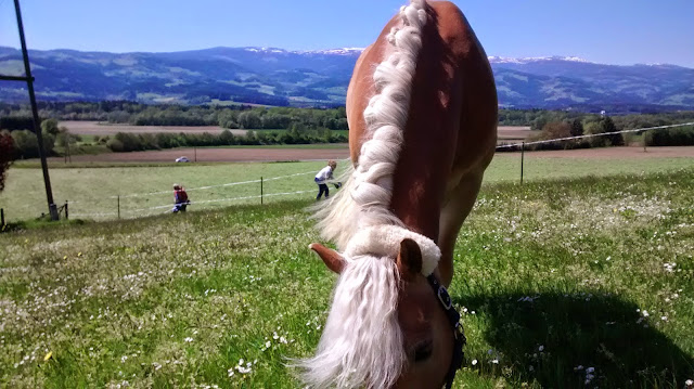 Choosing The Best Pasture For Your Horses
