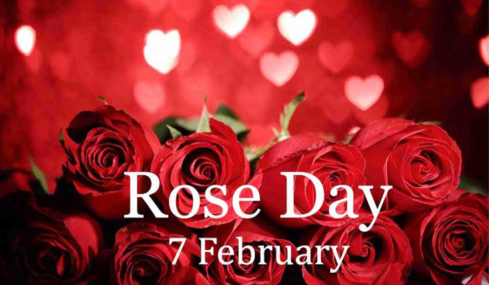 173+ (Best) Happy Rose Day Quotes In Hindi  Rose Day Wishes In Hindi  Rose Day Shayari In Hindi  Rose Day Status In Hindi