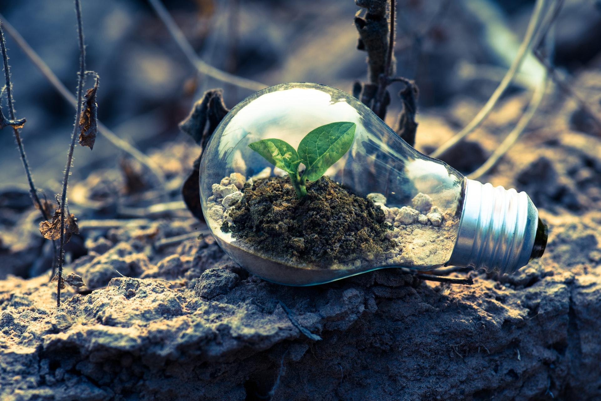 القمة العالمية للاقتصاد الأخضر يناقش استراتيجية الإمارات UAE للتنمية الخضراء