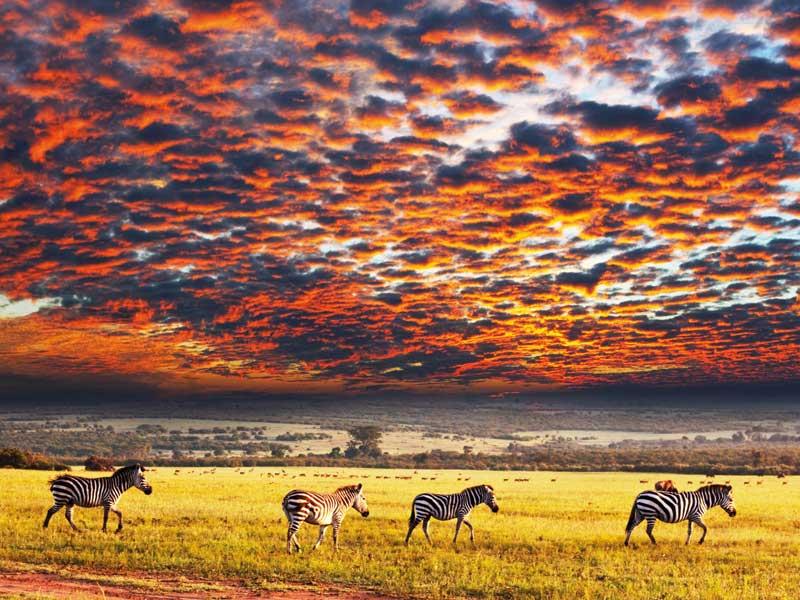 Serengeti National Park 4
