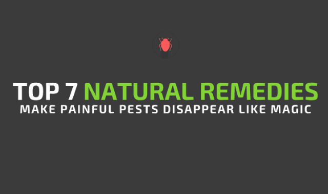 Top 7 Natural Remedies Make Painful Pests Disappear Like Magic