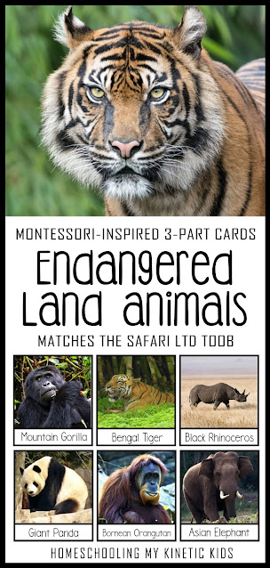 Learn about rare species as you explore and play with Safari Ltd Endangered Land Animals toob.  Free printable matching cards for the toob.
