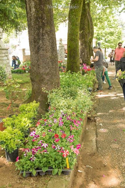 Γιάννενα: Χρώματα ...Και Αμέτρητα Λουλούδια Στην Ανθοκομική Εκθεση Στα Λιθαρίτισα[Φωτο]
