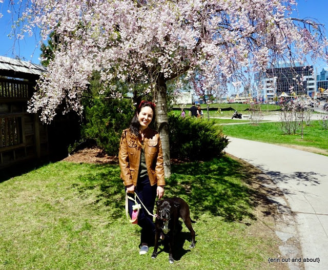 {Erin Out and About} Sakura in Kariya Park