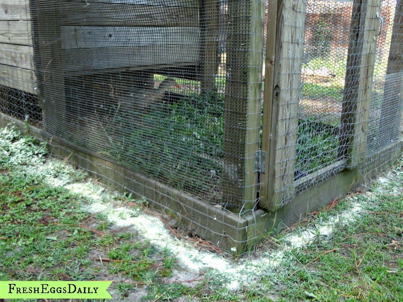 Snake in the Duck House! 9 Tips to Help Repel Snakes | Fresh