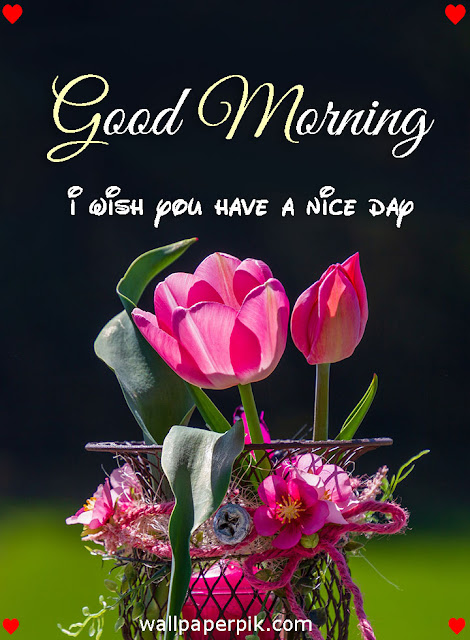 good morning images free download for whatsapp hd download pictures