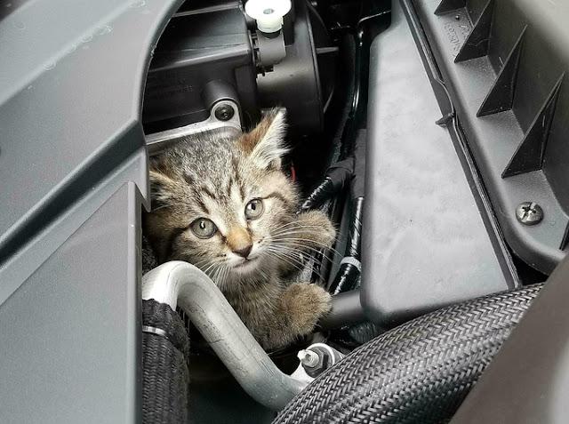 Hài hước hơn một số chủ xe còn nuôi mèo trong khoang máy để sua đuổi chuột