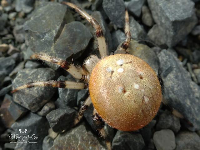 Stock Photo Spider