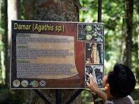 hutan madapi, wisata pendidikan yang tersembunyi
