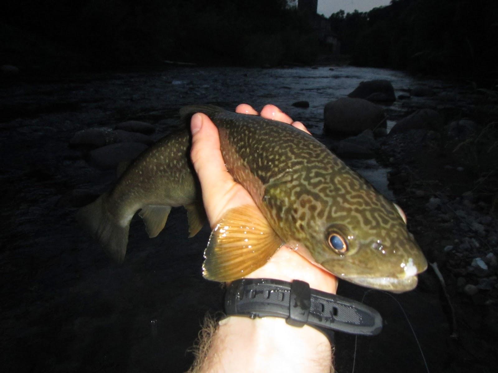 Rivista la nostra caccia e pesca