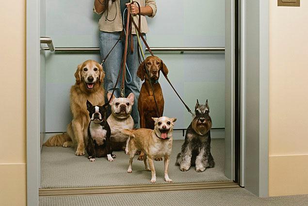 Quy định nuôi chó ở chung cư