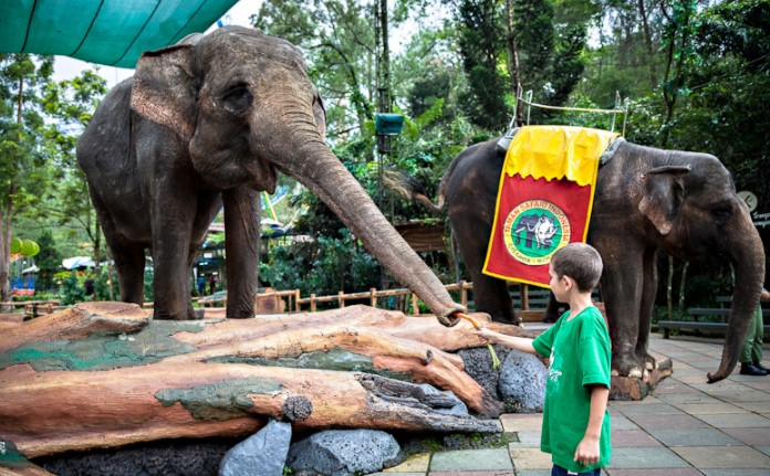 Harga Tiket Masuk Taman Safari Cisarua Bogor Juli S D Agst