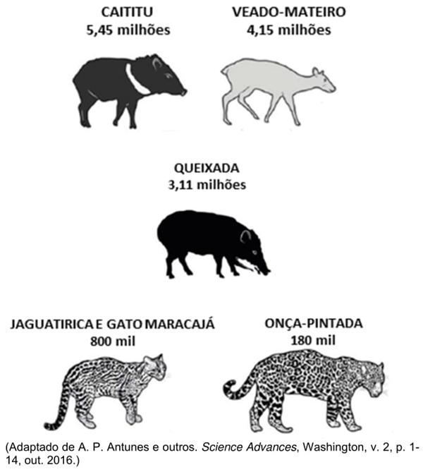 A figura a seguir indica o número total de animais terrestres mortos no período de 1904 a 1969.