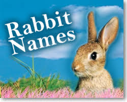 Kumpulan Nama Kelinci holland lop yang Bagus & lucu