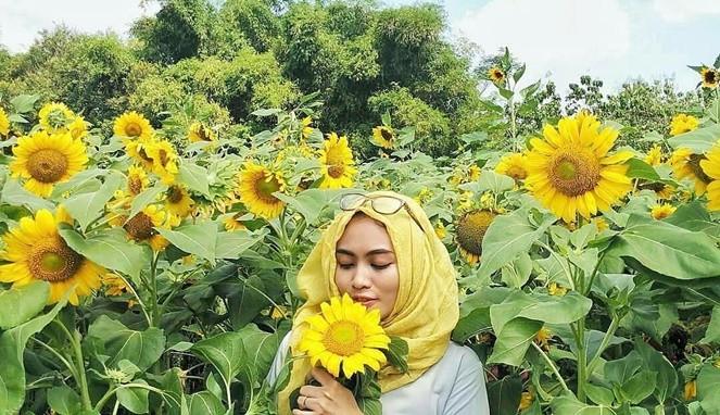 Taman Bunga Matahari Di Kediri