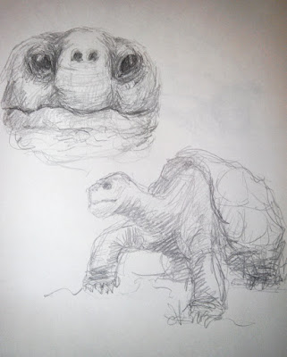 illustration sketches tortues turtle