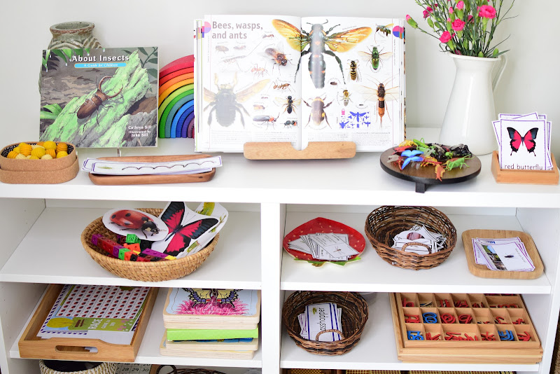 Insect Themed Lesson Plans for Kindergarten to First Grade