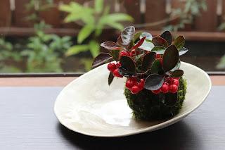 白い変形鉢にのったゴールテリアの苔玉