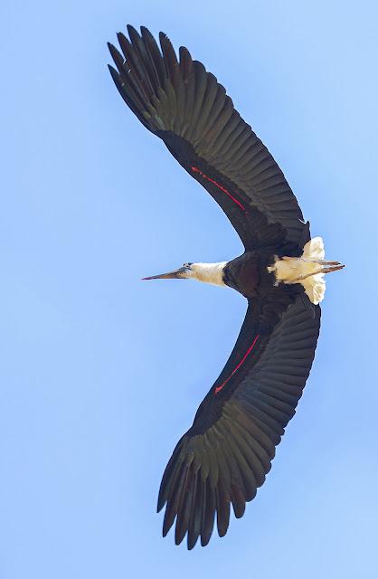 Đi tour Bản Đôn săn ảnh chim trong rừng khộp Yok Đôn