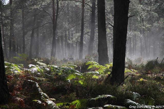 Evaporation pluviale, Forêt de Fontainebleau, Franchard
