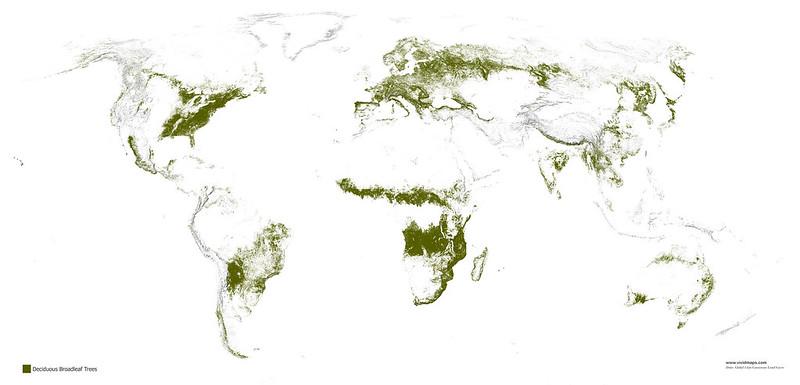Deciduous broadleaf forests