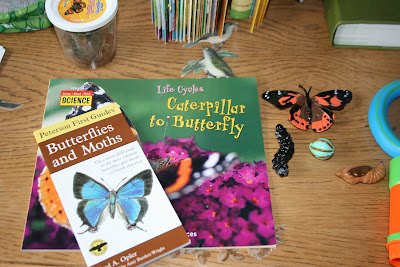 Butterfly Unit Study homeschool preschool
