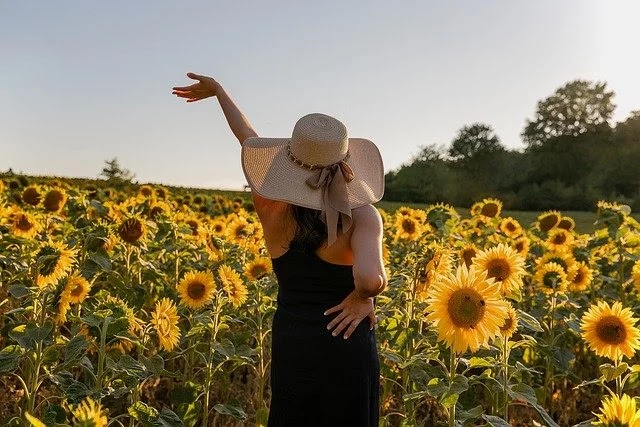 Information & 90 Facts About Sunflowers