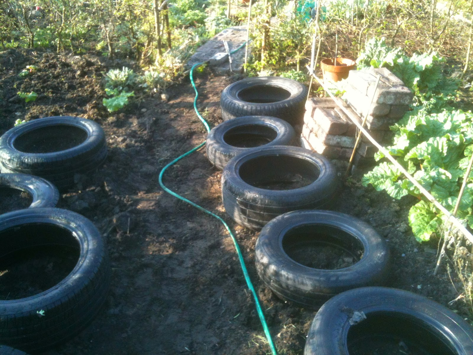 How to grow strawberries in tyres.