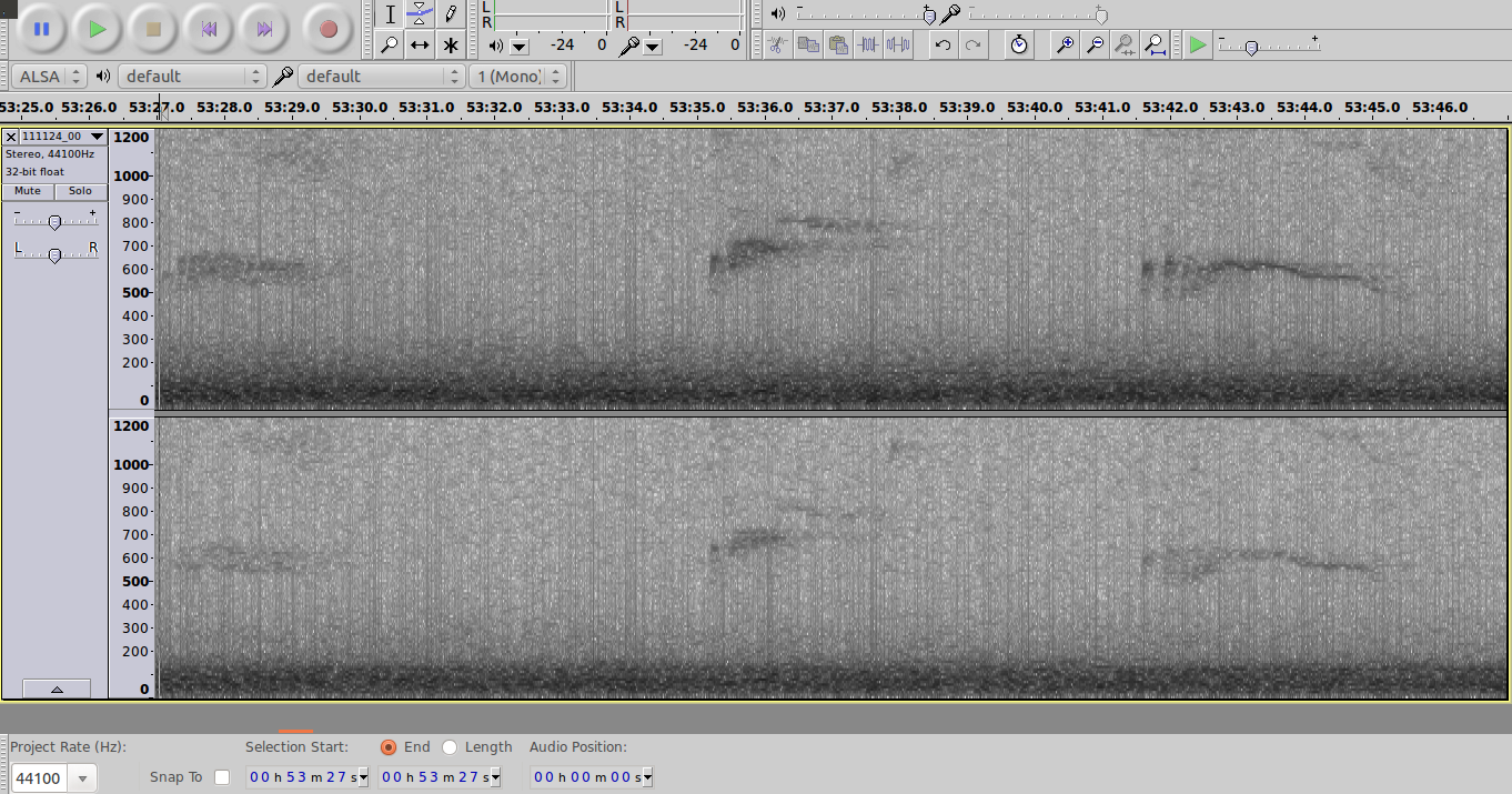 Sasquatch Bioacoustic: Using Audacity Spectrograms to Review
