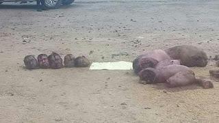 Dejan 5 cuerpos desmembrados en límites entre Veracruz y Oaxaca