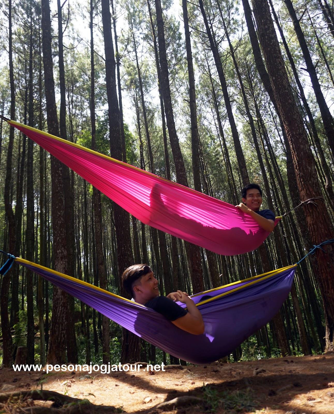 Hutan Pinus Asri, Dlingo