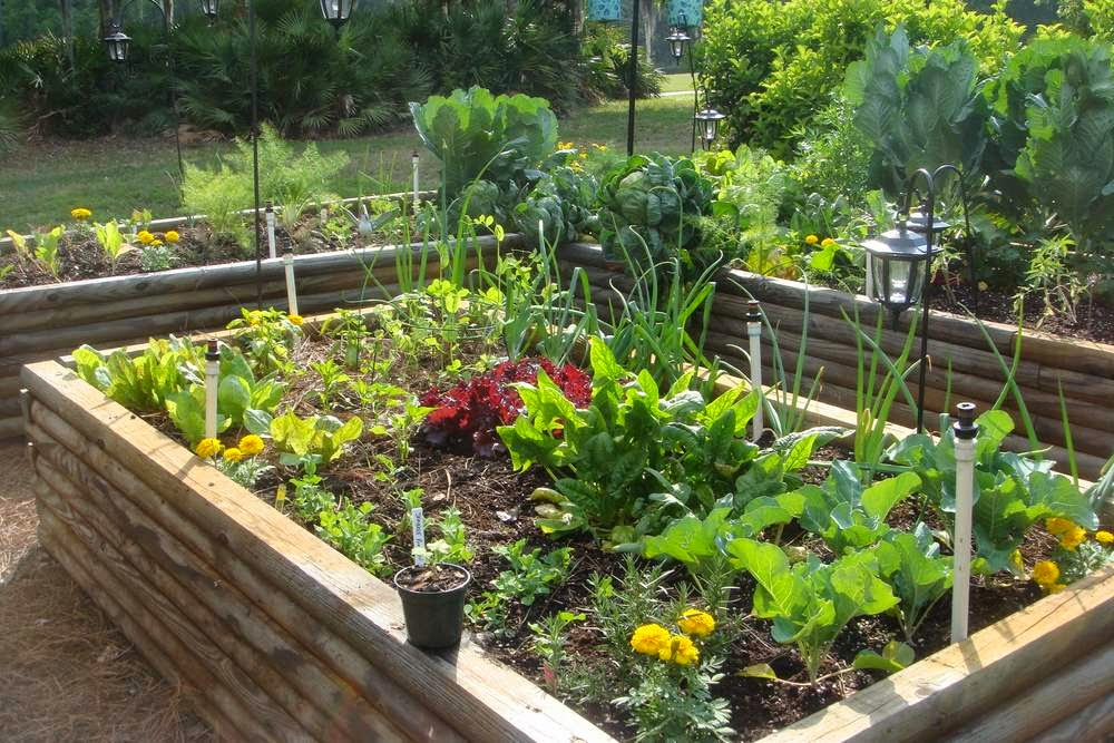 Planting vegetables and fruit in the backyard