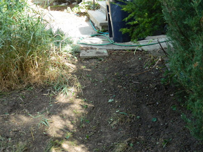 Toronto Summer Front Yard Cleanup in Koreatown After by Paul Jung Gardening Services--a Toronto Organic Gardener