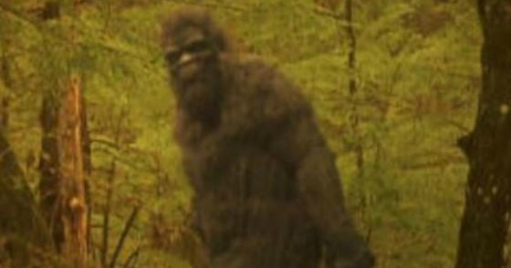 Bigfoot Encounters: Indiana, Virginia, Wisconsin & Idaho