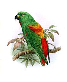 Burung yang masih termasuk jenis beo berbadan kecil dalam keluarga  Mengenal Burung Serindit Sula