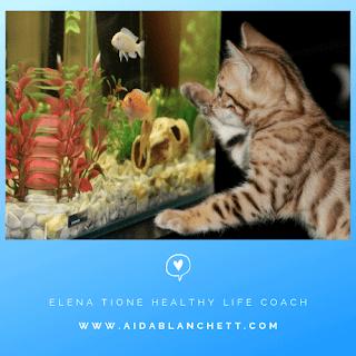 Gli acquari aiutano a mitigare lo stress.    Il movimento dei pesciolini è ipnotico e calmante... | Elena Tione Healthy Life Coach