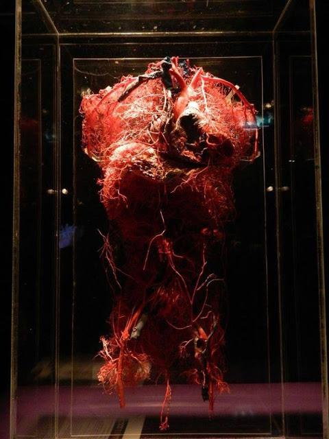 شبكة-الأوعية-للجسم-العلوي