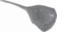 gambar Bentuk Paruh Burung Kolibri