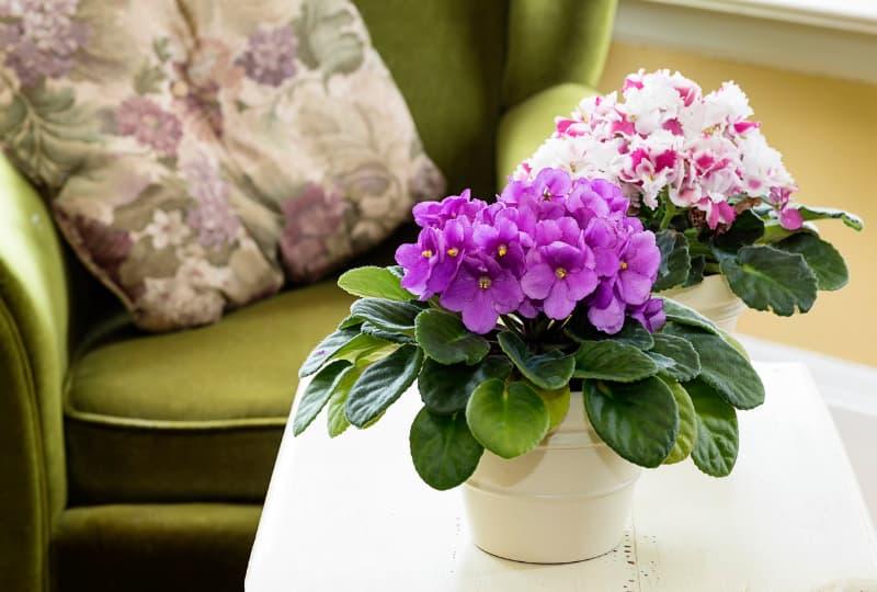 Dicas de plantas para decorar a casa