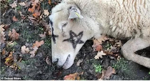 Σατανιστές στην Βρετανία συνεχίζουν να σκοτώνουν  πρόβατα