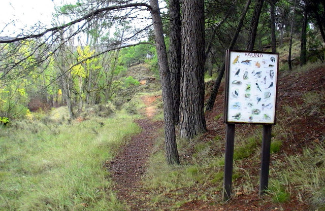 camino-botanico-fauna-valencia