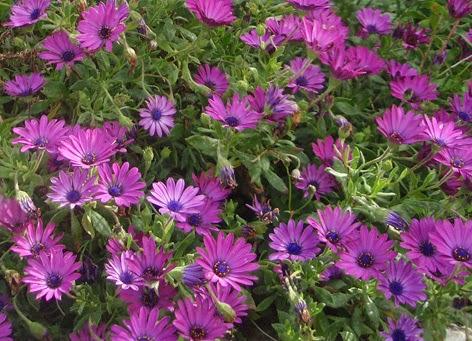 Flores en el jard n durante todo el a o for Plantas hoja perenne