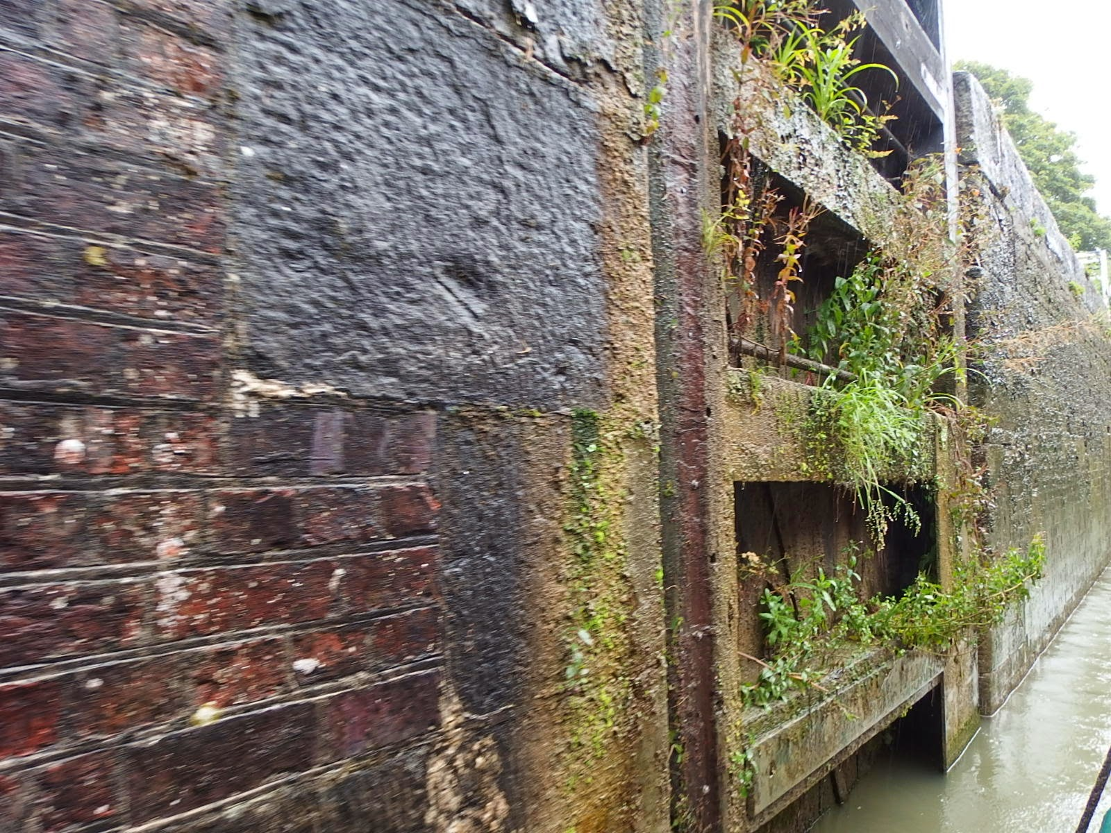 Plant communities in a lock gate on the Kennet and Avon canal at Devizes